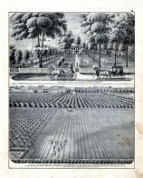 H.M. Miller, Horticulrtural Farm, Residence, Henry Miller, Peach Orchard, Morgan County 1872